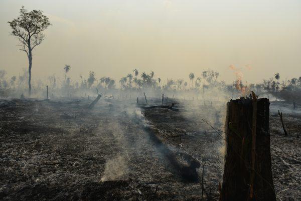 Y Mañana Más in English – The Amazon Rainforest is in trouble